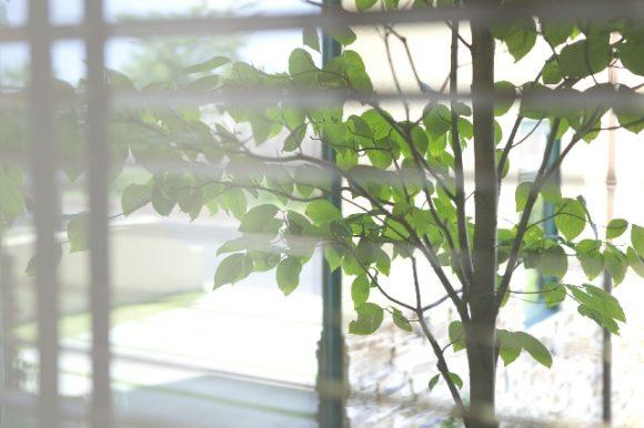 新築 玄関の窓 すりガラスか透明か画像
